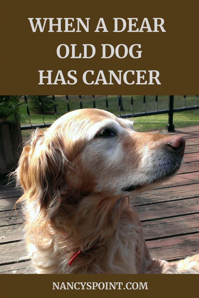 when a dear old dog has cancer