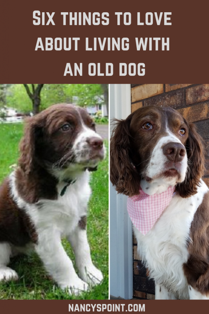 Six things to love about living with an old dog #dogs #seniordogs #olddogs #pets