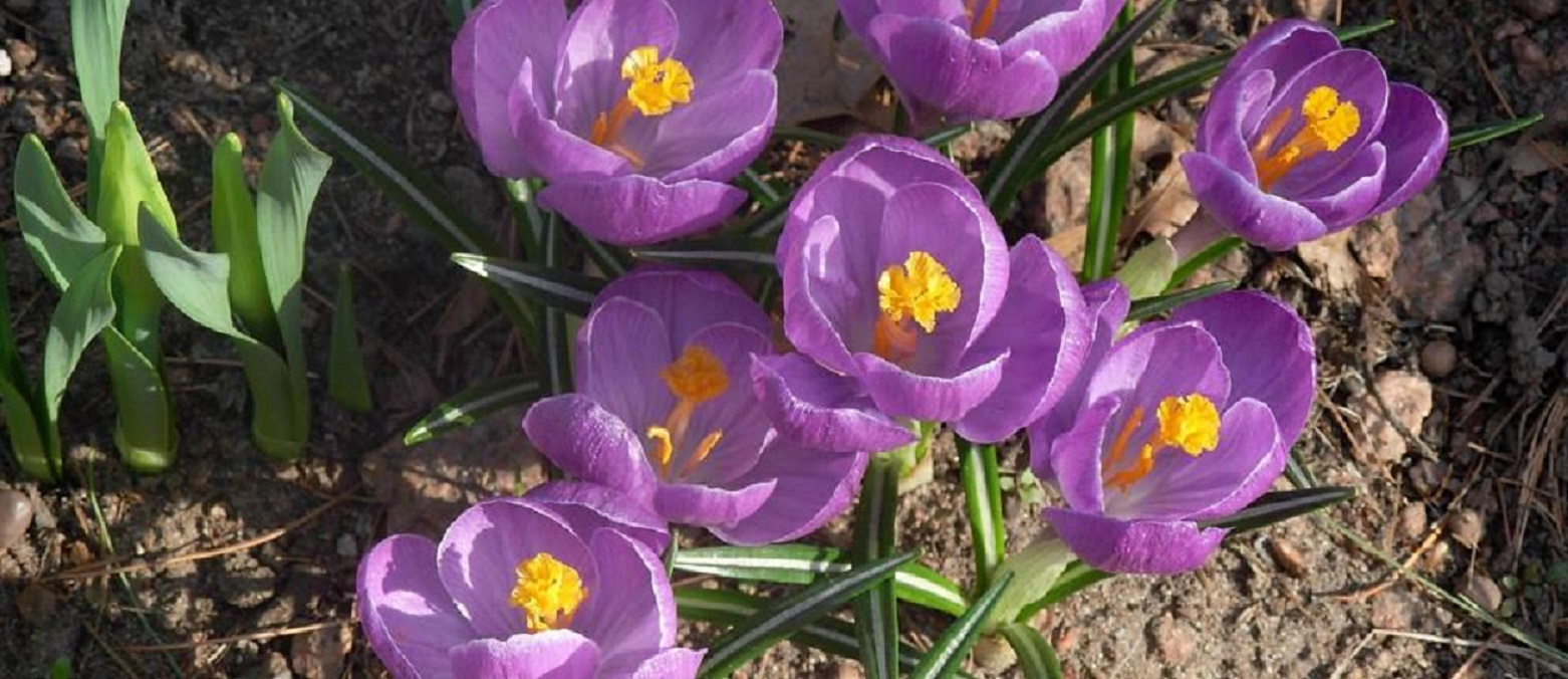Trying to anticipate #spring #cancer #cancerdiagnosis #breastcancer #spring