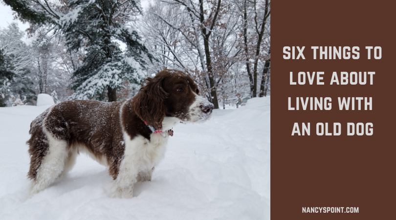 Six Things to Love About Living with an Old Dog #seniordogs #dogs #doglife #pets #dearolddog
