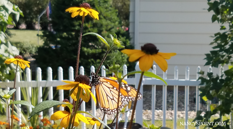 What did you do on your #summer #vacation? #breastcancer #blogging #MotherNature #butterflies #gardening